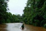 Di Konawe Utara, banjir sebabkan ratusan hektare sawah puso