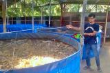 Pokdakan Kota Solok kembangkan budidaya ikan sistem Bioflok