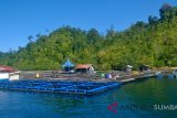 PT ASS di Pesisir Selatan mampu hasilkan 15 ton ikan kerapu per tahun
