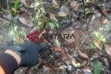 SAR temukan bekas kaki bocah hilang di Sembakung