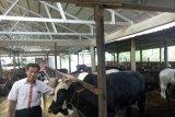 Dompet Dhuafa tebar 237.520 hewan kurban