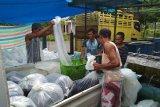 Danau tercemar, produksi ikan air tawar Agam turun