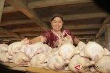 Harga daging ayam mulai bergerak naik
