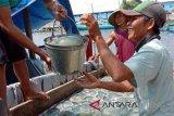 Nelayan Teluk Penyu Cilacap kembali berburu ubur-ubur