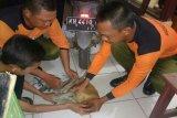 Warga Sampit kembali temukan bekantan hanyut, waspada