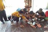 Mahasiswa STPP periksa hewan kurban di 11 masjid Kota Magelang