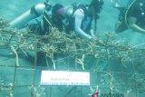 AP - 1 Tanam ratusan terumbu karang pantai Malalayang