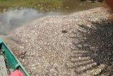 Pencemaran sungai Seranau resahkan warga