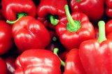 Manfaat paprika, tingkatkan penglihatan hingga cegah kanker