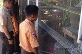 Kebun binatang mini membuat siswa SMAN-2 Padang Pariaman betah di sekolah