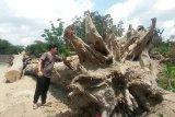 BPCB Yogyakarta teliti usia jati pendem dekat situs Candi Kedulan