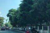 Warga Yogyakarta wajib periksa kondisi pohon hadapi pancaroba