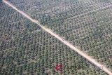 Greenpeace nilai moratorium sawit langkah kurang bertaring pemerintah