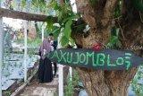 Objek Wisata Curup Kambas OKU lakukan persiapan jelang libur Lebaran