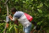 Hindari pengrusakan, BKSDA Agam pasang imbauan di lokasi penemuan bunga bangkai