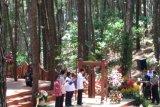 Jokowi biasa melihat hutan pinus di instagram