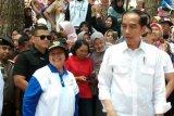 Jokowi minta perusahaan kayu ajak masyarakat menanam pohon