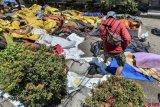 71 warga negara asing berada di Palu saat gempa dan tsunami