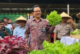 Yogyakarta gencarkan penerapan konsep pertanian perkotaan