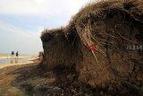 Warga berada di sekitar pantai yang rusak terkikis abrasi di desa Sendang, Karangampel, Indramayu, Jawa Barat, Selasa (30/10/2018). Abrasi pantai di pesisir Indramayu kian meluas dengan rata-rata laju abrasi hingga 10 meter per tahun. ANTARA JABAR/Dedhez Anggara/agr.