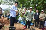 Belasan rombongan Pemkab Tambrauw kehilangan kontak di pedalaman