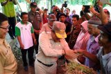 Kelompok hutan kemasyarakatan Agam kembangkan serai wangi seluas 10 hektare