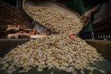 Pekerja mengeringkan biji kedelai untuk dijadikan tempe di rumah produksi tempe arema, Bandung, Jawa Barat, Rabu (24/10/2018). Data Angka Ramalan I BPS-Kementerian Pertanian 2018 mencatat produksi kedelai nasional mencapai 982.598 ton Biji Kering (BK) atau naik sebesar 443.870 ton BK (82,39 persen) dibandingkan dengan periode yang sama di tahun 2017 sebesar 538.728 ton BK. ANTARA JABAR/Raisan Al Farisi/agr.