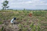 Suasana lahan di area proyek perencanaan pembangunan Bandara Sukabumi, Cikembar, Kabupaten Sukabumi, Jawa Barat, Sabtu (20/10/2018). Pemerintah Pusat menyiapkan dana sebesar Rp400 miliar untuk pembangunan Bandara Sukabumi yang akan dimulai pada awal 2019 dan diperkirakan rampung pada tahun 2022. ANTARA JABAR/Nurul Ramadhan/agr.