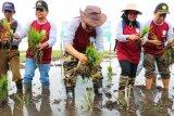 Iklim-konflik bisa jerumuskan jutaan orang krisis pangan