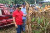 Petani jagung Gunung Kidul memasuki panen jagung