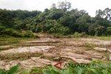 Satu hektare sawah milik warga Ampeknagari tertimbun longsor, rusak parah