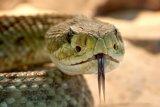 Ahli racun ASEAN kumpul di Yogyakarta bahas penanganan gigitan ular