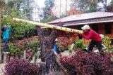 Kubu Gadang memanjakan pengunjung dengan spot-spot berfoto unik