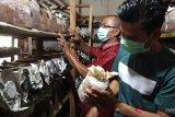 Pariaman kembangkan budidaya jamur tiram melalui dana desa (video)
