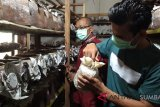 Jepang budidaya tiram di Banda Aceh