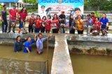 Ribuan ikan Patin dan Nila di kolam penggangga DKP mulai dipanen