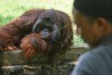 Penataan kebun binatang
