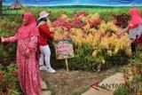 Petani Sukoharjo sulap lahan kosong jadi taman bunga indah