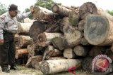 Satgas Gakkum LHK tangani kasus kayu hutan Tambora