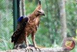 Populasi satwa di Taman Nasional Gunung Halimun Salak berkembang