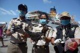 Pengawasan zona penyelundupan, Karantina Pertanian gandeng TNI-POLRI