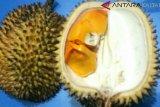 Ruas, durian kuning yang tak memabukan