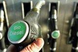 UD Trucks lakukan riset bahan bakar biodiesel 30 persen