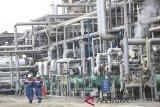 Pertamina didorong lahirkan minyak diesel 100 persen sawit
