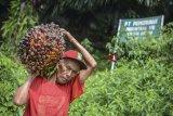 Pemerintah Indonesia resmi gugat Uni Eropa ke WTO terkait sawit