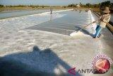 Pemkab Lombok Barat ingin nelayan sejahtera dengan garam