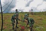 Kodim 1702/Jawawijaya hijaukan 50 hektare kawasan tandus