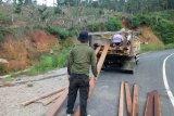 Polisi Hutan temukan kayu olahan diduga hasil pembakan liar