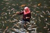 Wisata mata air Umbul Senjoyo