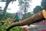 Antisipasi angin kencang, Bupati Banjarnegara ingatkan pemangkasan pohon berkala